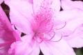 anima-dellazalea_sito