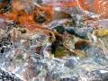 p1080474_tronco-fossile-levigato_sito