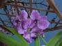 orchidee_bellissime