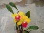 orchisdalmiolibro