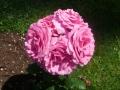 P1100520_fragrance_des_jardins_sito